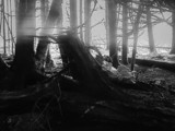 Forest Scene by Eubeen, contests->b/w challenge gallery
