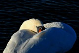 Do Not Disturb by braces, Photography->Birds gallery