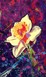 Daffodil Dream by bfrank, abstract gallery