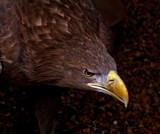 Who you calling Banana Beak ?.... by biffobear, photography->birds gallery