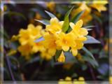 Jubilate by wheedance, Photography->Flowers gallery
