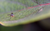 Green fly by Samatar, photography->insects/spiders gallery