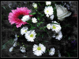 Flowers 22 by rvdb, photography->manipulation gallery