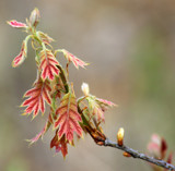 New Leaves by Pistos, photography->nature gallery
