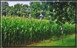 Kinda Corny by Jimbobedsel, Photography->Landscape gallery