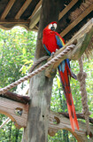 Free-Roaming Macaw by Nikoneer, photography->birds gallery