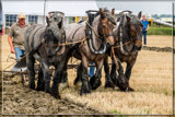 Ploughing Competition 01 by corngrowth, photography->animals gallery