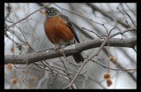 Just a Ho Hum Morning by garrettparkinson, Photography->Birds gallery