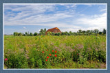 Zeeland Farmhouses 05 by corngrowth, Photography->Landscape gallery
