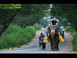 Joy ride by priyanthab, Photography->Animals gallery