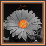 Orange Gerbera Swirl by ccmerino, Photography->Flowers gallery