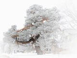 Frost on the Tree by Starglow, photography->manipulation gallery