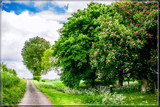 Rural Spring 5 by corngrowth, photography->landscape gallery