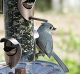 Titmouse perched by gharwood, photography->birds gallery