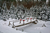 Saws, Brooms, Scenery and Twine by phasmid, Holidays->Christmas gallery