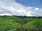 Tea glory by priyanthab, Photography->Landscape gallery