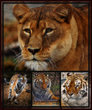 Cat Camp Collage by tigger3, photography->animals gallery