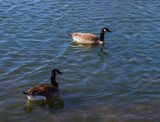 Tranquil Day for Two by Pistos, photography->birds gallery