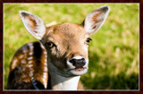 Deer Friends (1 of 3) by corngrowth, photography->animals gallery