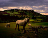 HIGHLAND PONIES by LANJOCKEY, Photography->Animals gallery