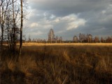 dutch moor by stormdancer, photography->landscape gallery