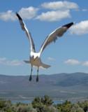 Gull Attack by Zava, photography->birds gallery