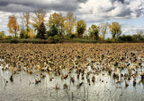 Toussaint 5 by Jimbobedsel, Photography->Landscape gallery