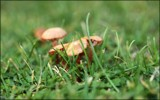 Getting down low by LynEve, photography->mushrooms gallery
