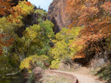 Fall in Zion by jrasband123, Photography->Landscape gallery