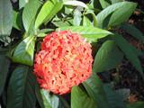 Spreading joy 5 by sahadk, Photography->Flowers gallery