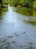 Ducks to Water by WTFlack, photography->water gallery