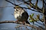 Birds by GIGIBL, photography->birds gallery