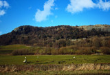 Sheep on an upland meadow by biffobear, photography->landscape gallery