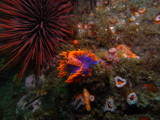 Spanish Shawl Factory by Jahlela, Photography->Underwater gallery