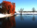 Weeping Orange by jojomercury, Photography->Landscape gallery