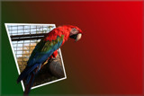 Parrot-manip by mmynx34, Photography->Manipulation gallery