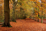 A walk in the forest - this way please by Paul_Gerritsen, Photography->Landscape gallery