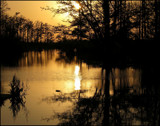 Down on the Bayou by allisontaylor, Photography->Sunset/Rise gallery