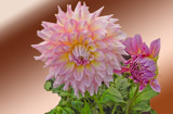 Dahlia and Bud by Ramad, photography->flowers gallery