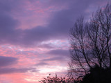 Buddleia Sunset by Tootles, photography->sunset/rise gallery