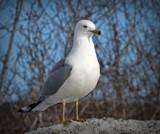 Bird 21 by picardroe, photography->birds gallery