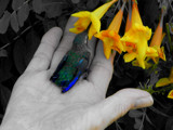 A Bird in the Hand by Lightpainter, photography->birds gallery