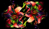 Flower Salad by snapshooter87, photography->manipulation gallery