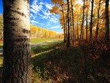 Golden Acres by mayne, Photography->Landscape gallery
