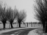 Winter Willows by Paul_Gerritsen, Photography->Still life gallery