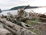 Drift On Wood by sheba1936, Photography->Shorelines gallery