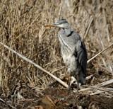Top by biffobear, photography->birds gallery