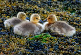 naptime's over by solita17, Photography->Birds gallery