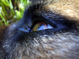 in deep and skyish thought by jttigereye, photography->pets gallery