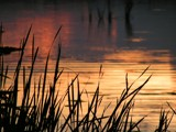 Sunset Grass by Torque, Photography->Sunset/Rise gallery